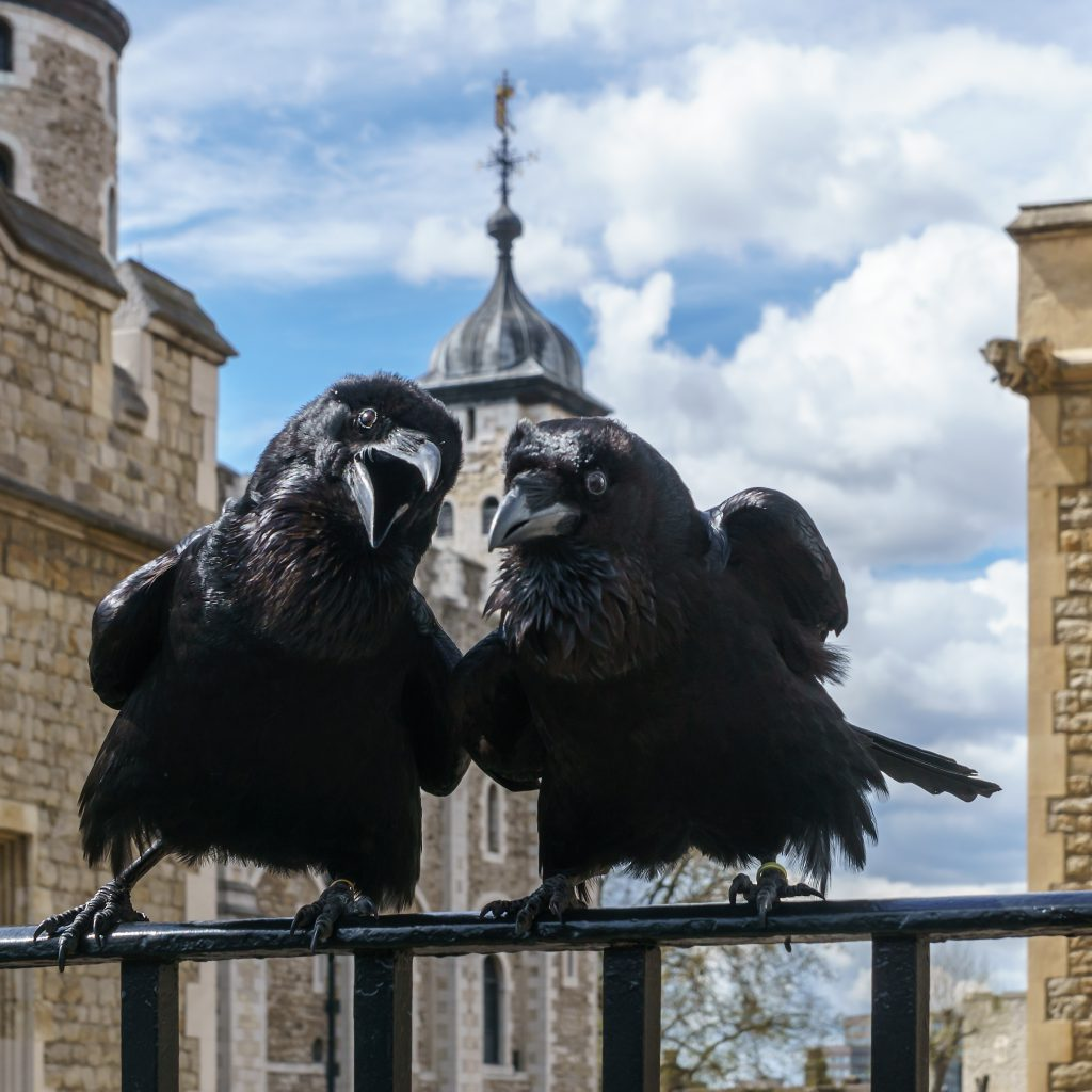ravens at the tower wikipedia 1024x1024 - NEW UK Coin Series celebrates one of Britain's most iconic attractions…